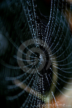 Spider web and drop in morning