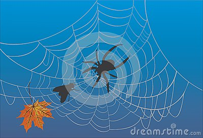 Spider web and fly on blue