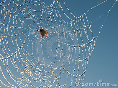 Spider web like a delicate necklace of brilliant c