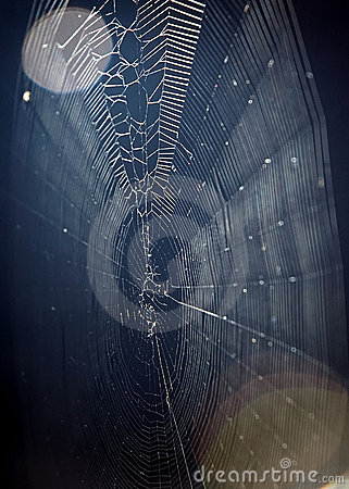 Spider web and moon