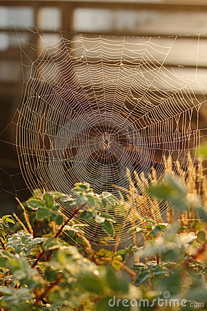 Spider Web, Morning Dew