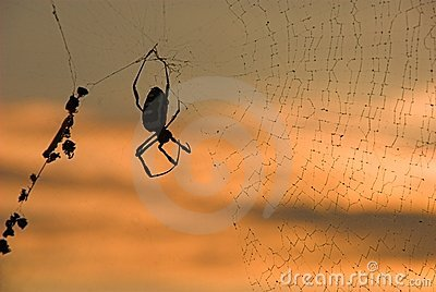 Spider and web at sunrise
