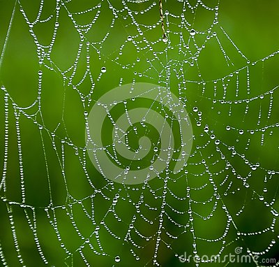 Free Spider Web With Water Droplets Stock Images - 118242284
