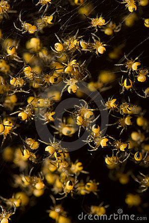 Free Spiders Royalty Free Stock Photo - 14743355