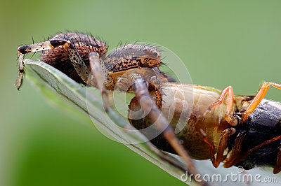 Spiders food
