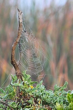 Free Spiders Web Stock Photography - 14417052