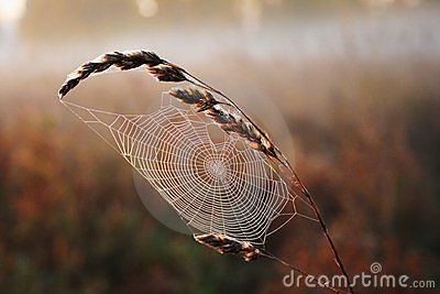 Spiders web in the field