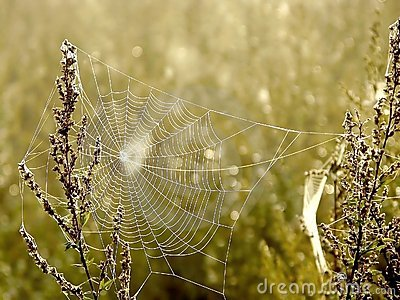 Spiders web on a meadow at sunrise