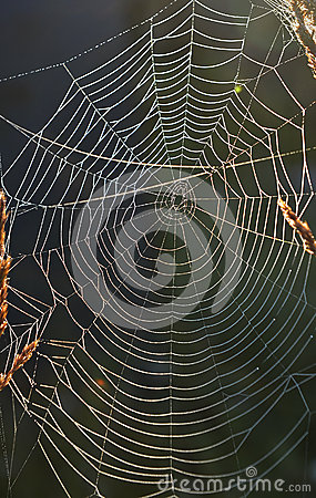 Spiderweb background