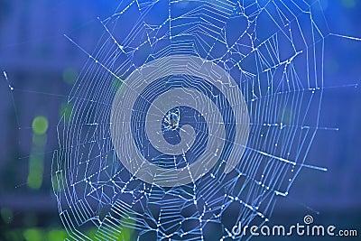 Spiderweb on blue background