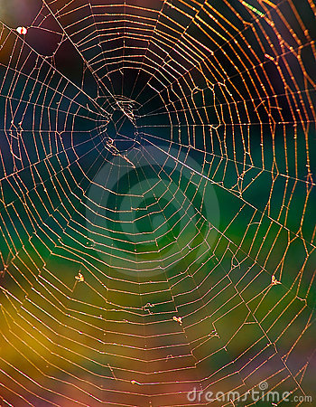 Spiderweb brightness
