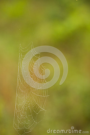 Spiderweb in the Bush in South Africa