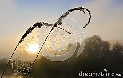 Spiderweb at colorful foggy dawn at the lake