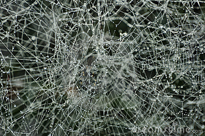 Spiderweb congelado