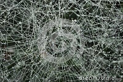 Spiderweb congelato