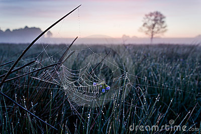 Spiderweb at Dawn