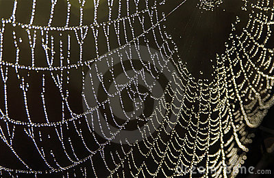 Spiderweb with dew droplets