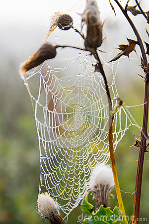 Spiderweb with dew in the morning