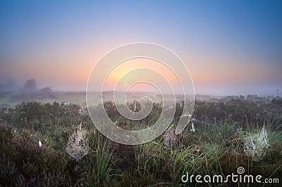 Spiderweb i soluppgångljus
