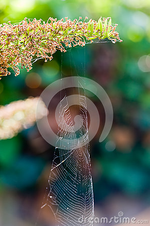 Spiderweb in nature
