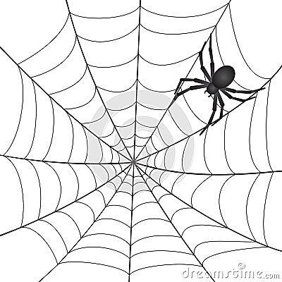 A Spiderweb with Spider