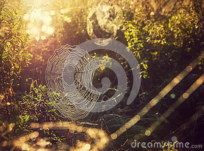 Spiderweb in sun