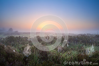 Spiderweb in sunrise light