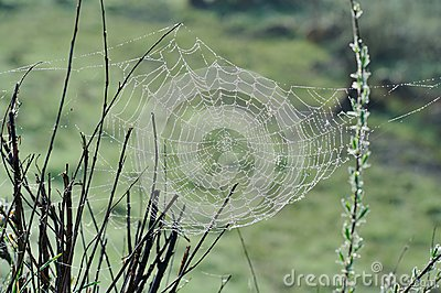 Spiderweb with Water Drops