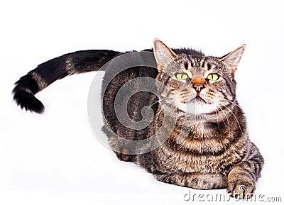 Spielerische Katze