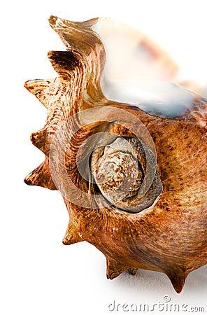 Spiked seashell.