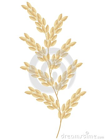 Free Spikelet Of Rice Plant Isolated On White Background. Royalty Free Stock Photos - 129773468
