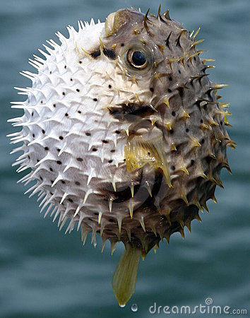 Free Spiky Fish Stock Photography - 7697772