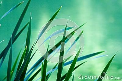 Spiky plant s leafs