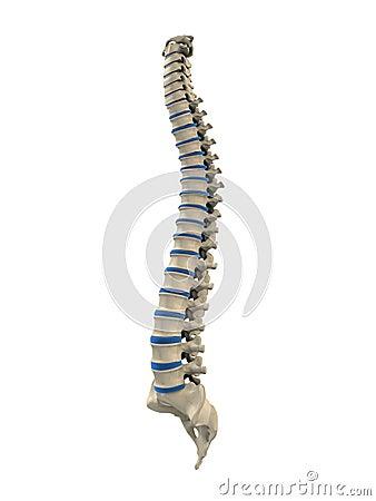 Crescita di un tessuto di osso di una spina dorsale di reparto cervicale