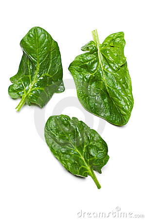 Free Spinach Royalty Free Stock Photo - 4501135