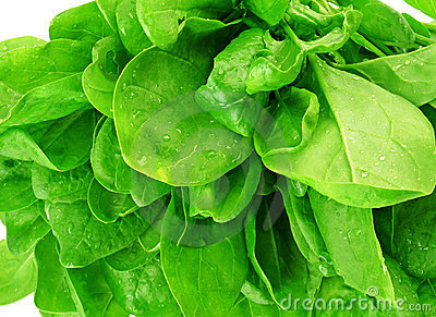 Spinach detail of leaves