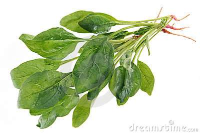 Spinach with root