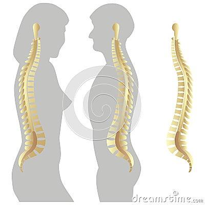 Spinal column