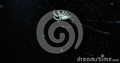Spindel på ett netto på natten, inklusive original- ljudsignal stock video