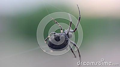 Spindel som bygger en rengöringsduk stock video