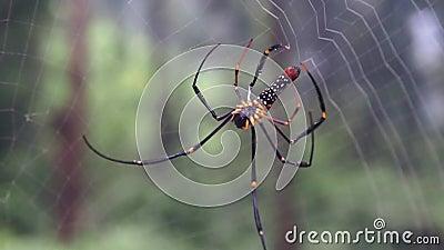 Spindel som gör RENGÖRINGSDUKlängd i fot räknat stock video