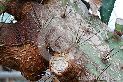 Spines on cactus