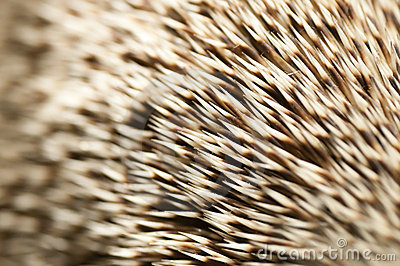 Spines of a hedgehog