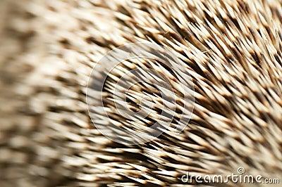 Spines of a hedgehog