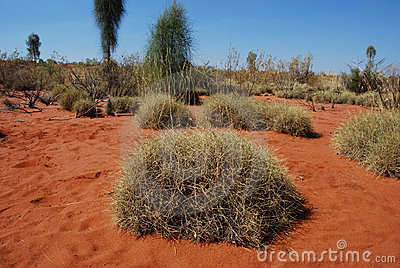 Spinifex Editorial Stock Image