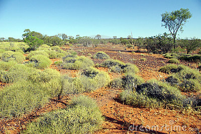 Spinifex in Red Centre, Australia