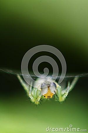 Spinne in seinem Web