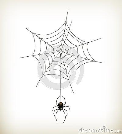 Spinne und Web
