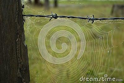 spinnennetze auf altem zaun stockfotografie bild 8181472. Black Bedroom Furniture Sets. Home Design Ideas