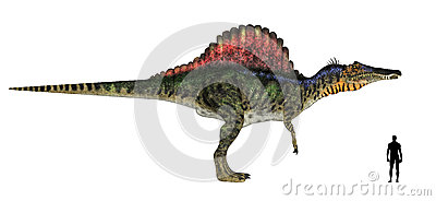 Spinosaurus Size Comparison Royalty Free Stock Photos ...